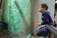 Niño en parque zoológico Imagen de archivo
