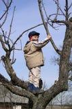 Niño en un árbol Foto de archivo
