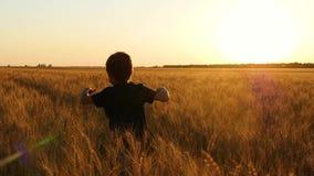 Niño feliz que corre en un campo de trigo en la puesta del sol Un niño pequeño que juega en un campo de trigo Inspire a la gente almacen de metraje de vídeo