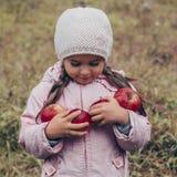 Niño feliz que sostiene manzanas rojas en sus manos Niño divertido de la cosecha al aire libre en parque del otoño imagen de archivo libre de regalías