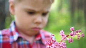 Niño feliz que sostiene un ramo de wildflowers Un regalo para la mamá mientras que camina en el parque Familia feliz, padres cari almacen de video