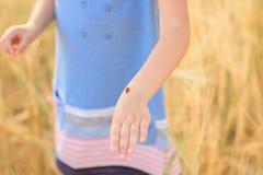 Niño hermoso en un campo del centeno en la puesta del sol Un niño en ropa asombrosa que camina a través del campo del centeno fotos de archivo