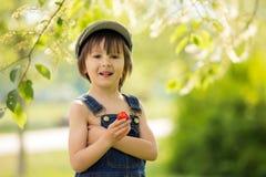 Niño hermoso lindo, muchacho, comiendo las fresas y en el parque imagen de archivo libre de regalías