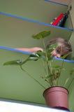 Niño juguetón que oculta detrás de la planta en un estante Imagen de archivo libre de regalías