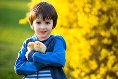Niño lindo dulce, muchacho preescolar, jugando con poca ji recién nacida fotografía de archivo libre de regalías