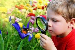 Niño observando una mariposa imagen de archivo libre de regalías