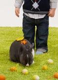 Niño pequeño con el conejito de pascua Imagenes de archivo