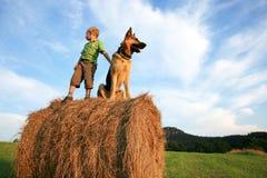 Niño pequeño con el perro grande en el prado durante summe Fotos de archivo
