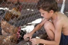 Niño pequeño con los pollos de la granja foto de archivo