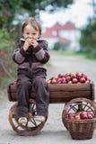 Niño pequeño, con una carretilla llena de manzanas Fotos de archivo libres de regalías