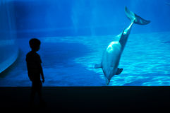 Niño pequeño delante de un delfín Imagen de archivo libre de regalías