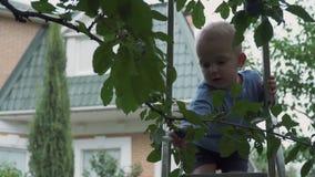 Niño pequeño en las escaleras en el jardín metrajes
