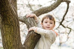 Niño pequeño en tiempo de primavera cerca del árbol del flor Fotografía de archivo libre de regalías
