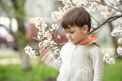 Niño pequeño en tiempo de primavera cerca del árbol del flor Foto de archivo