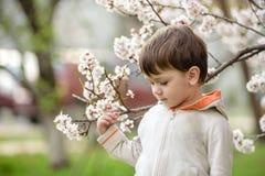Niño pequeño en tiempo de primavera cerca del árbol del flor Foto de archivo libre de regalías