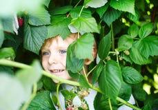 Niño pequeño feliz en granja orgánica de la frambuesa de la selección del uno mismo Foto de archivo