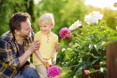 Niño pequeño lindo con su padre que trabaja así como secateur en jardín nacional Foto de archivo