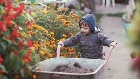 Niño pequeño lindo que conduce la carretilla en el jardín a través de la flor Intento masculino para mover el carro, trabajo al a Fotografía de archivo