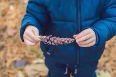 Niño pequeño lindo que juega con el cono grande del pino al aire libre Juego para el ki Foto de archivo libre de regalías
