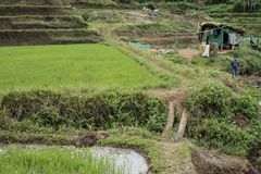 Niño pequeño por el campo del arroz en Pleiku fotografía de archivo libre de regalías
