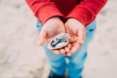 niño pequeño que lleva a cabo cáscaras del mar en sus manos imágenes de archivo libres de regalías