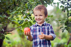 Niño pequeño que sostiene la manzana Foto de archivo libre de regalías