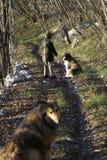 Niño pequeño y dos perros Foto de archivo libre de regalías