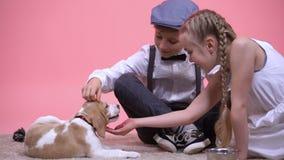 Niño pequeño y muchacha que acarician y que alimentan el perrito criado en línea pura divertido, nuevo animal doméstico de la fam almacen de video