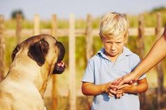 Niño pequeño y perro grande Fotografía de archivo libre de regalías