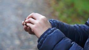Niño que abre un primer de la castaña almacen de metraje de vídeo