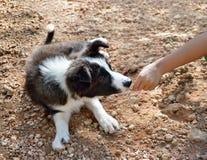 Niño que alimenta un perro Foto de archivo libre de regalías