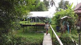Niño que camina el jardín orgánico de la granja del puente cruzado almacen de metraje de vídeo