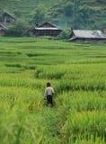 Niño que camina en los campos del arroz Fotografía de archivo