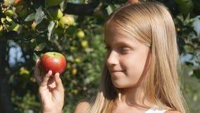 Niño que come Apple, niño en huerta, granjero Girl Studying Fruits en árbol imagenes de archivo