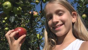 Niño que come Apple, niño en huerta, granjero Girl Studying Fruits en árbol imagen de archivo libre de regalías