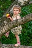 Niño que come la manzana en las ramas de árbol Fotos de archivo libres de regalías