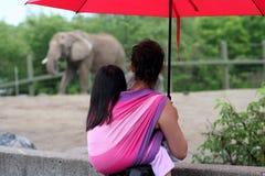 Niño que desgasta en el parque zoológico Imagenes de archivo