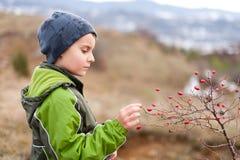 Niño que escoge bayas rojas Fotografía de archivo