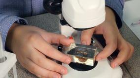 Niño que estudia biología en laboratorio de la escuela Las manos exploran la abeja usando el microscopio almacen de video