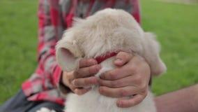 Niño que frota ligeramente y que abraza a su amigo del animal de animal doméstico Niño pequeño que juega con su perro en el parqu almacen de video