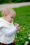 Niño que huele una manzanilla Fotografía de archivo