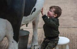 Niño que juega con la vaca de la reproducción fotografía de archivo