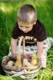 Niño que juega con los polluelos Imagen de archivo libre de regalías