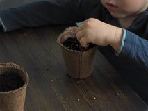 Niño que planta las semillas en pote de la turba Imagen de archivo