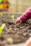 Niño que planta un almácigo en un suelo fértil Fotografía de archivo
