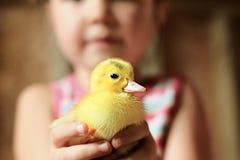Niño que sostiene el pato del bebé Fotografía de archivo