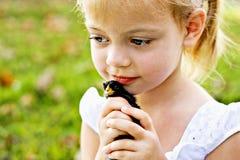 Niño que sostiene un pequeño polluelo Imágenes de archivo libres de regalías