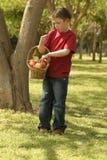 Niño que sostiene una cesta de manzanas Imagenes de archivo