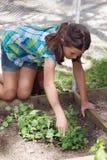 Niño que trabaja en remiendo del veggie Fotografía de archivo