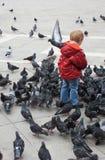 Niño rodeado por las palomas Imágenes de archivo libres de regalías